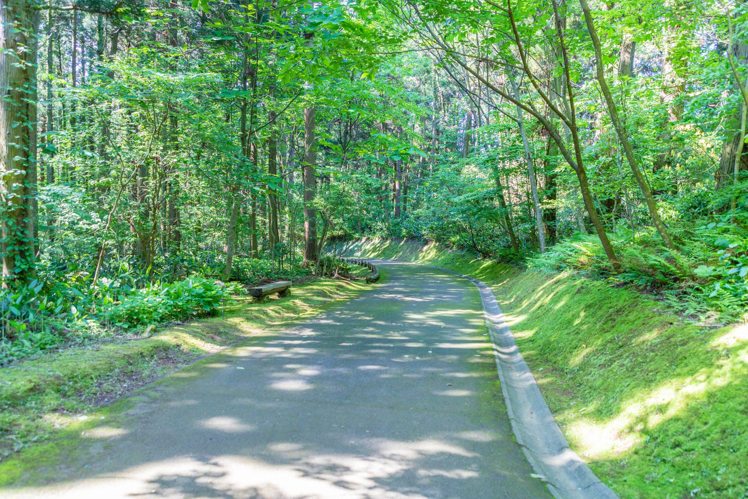 大潟水と森公園遊歩道